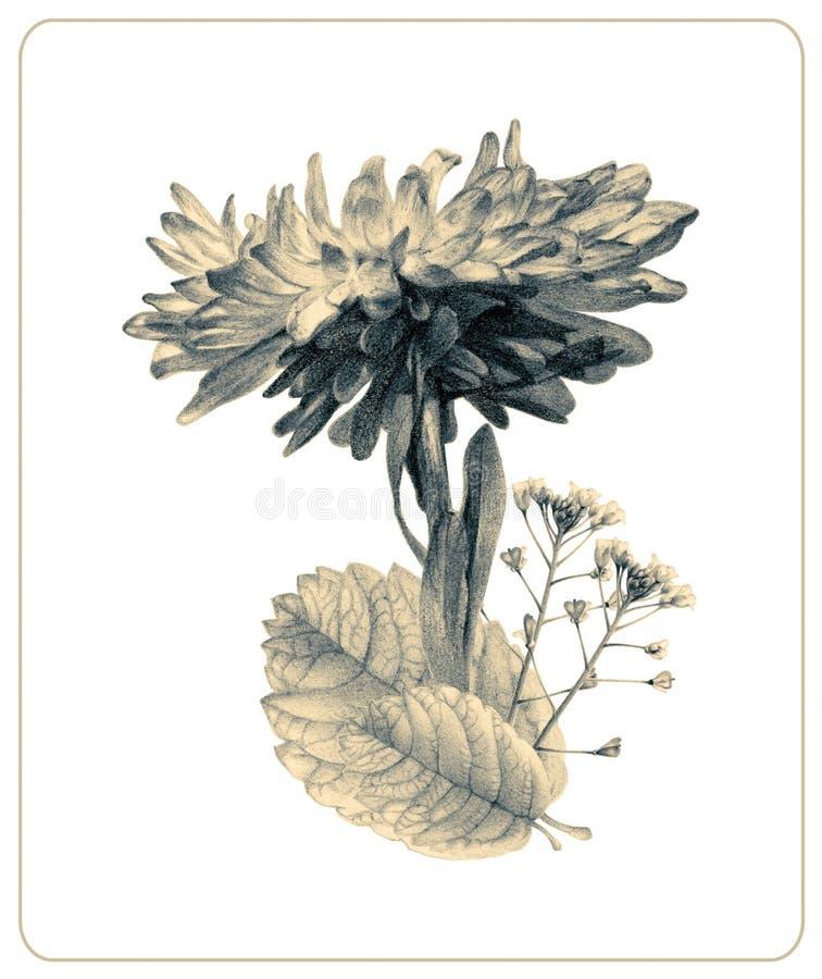Samenstelling van verschillende de lentebloemen en installaties vector illustratie
