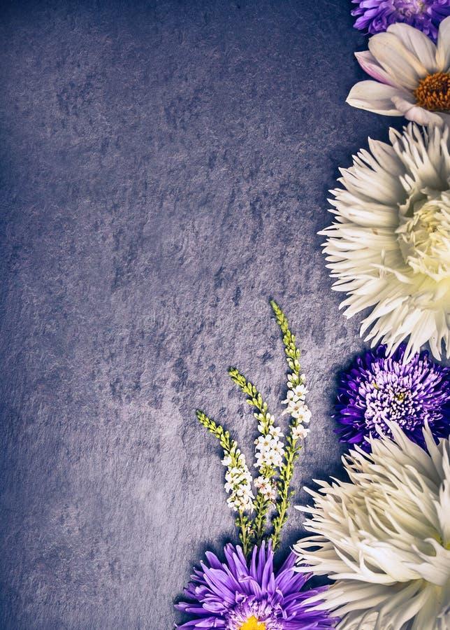 Samenstelling van witte dahlia's en blauwe asters op donkere achtergrond stock foto's