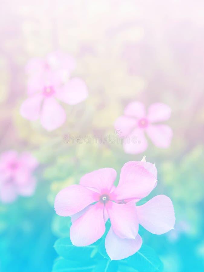 Samenvatting Onscherp van Bloem en kleurrijke achtergrond stock fotografie