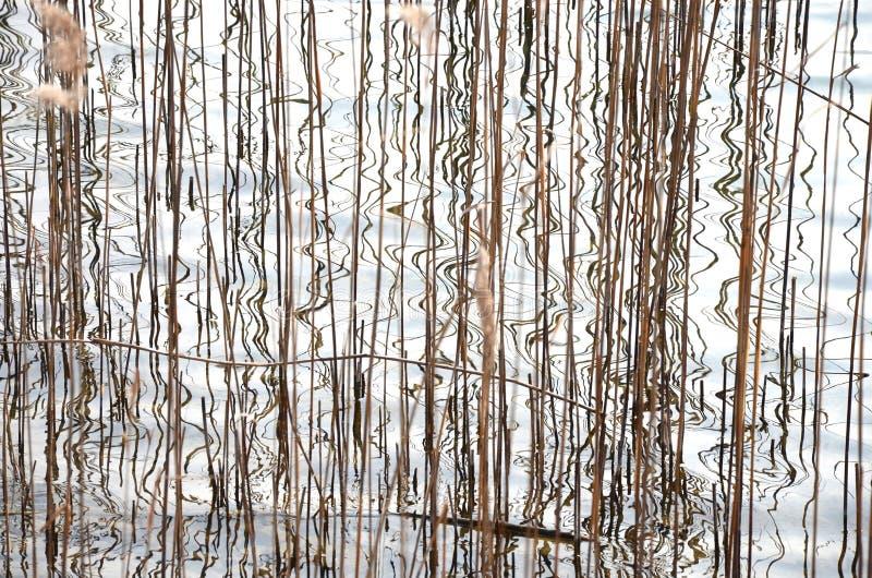 Samenvatting, riet en bezinningen in het water van een meer stock fotografie