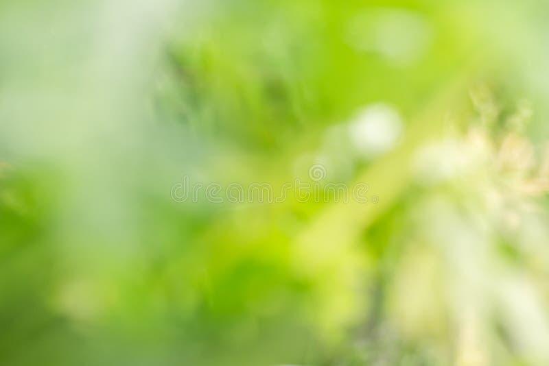 Samenvatting vaag van groene aard royalty-vrije stock foto