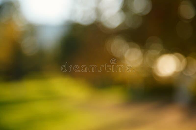 Samenvatting vage aardachtergrond Bosbomen, Zonnige dag, zonglans, bokeh Defocusedachtergrond voor uw ontwerp royalty-vrije stock fotografie