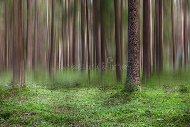Samenvatting vage boomboomstammen in het bos royalty-vrije stock fotografie