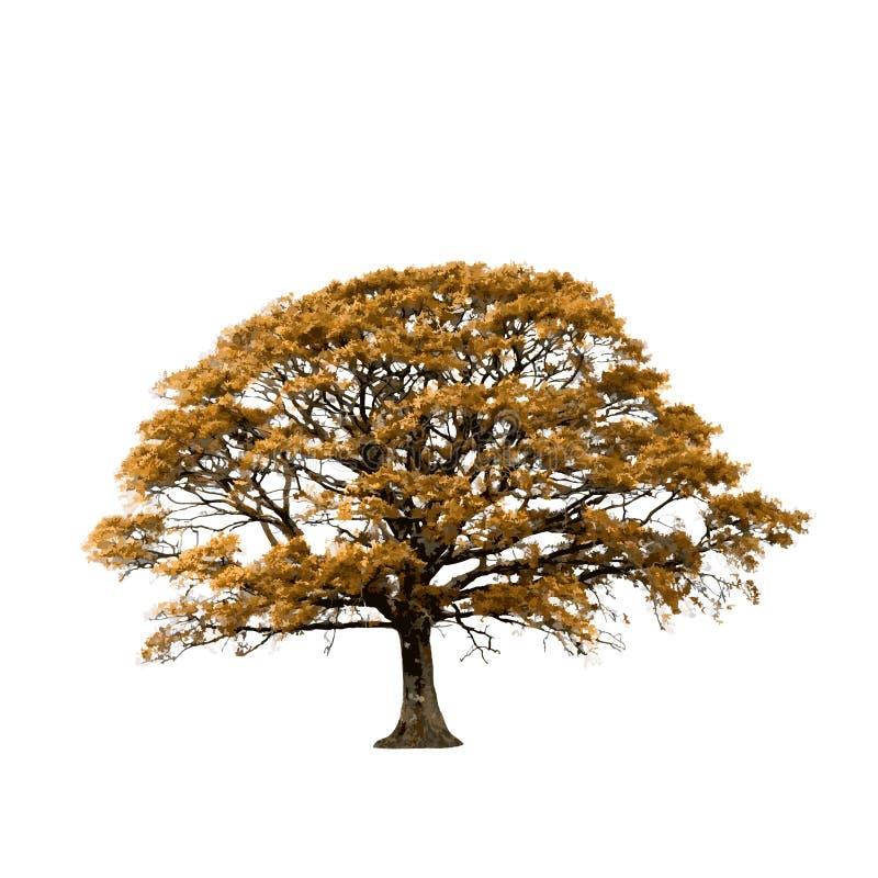 Samenvatting van de Boom van de herfst de Eiken royalty-vrije illustratie