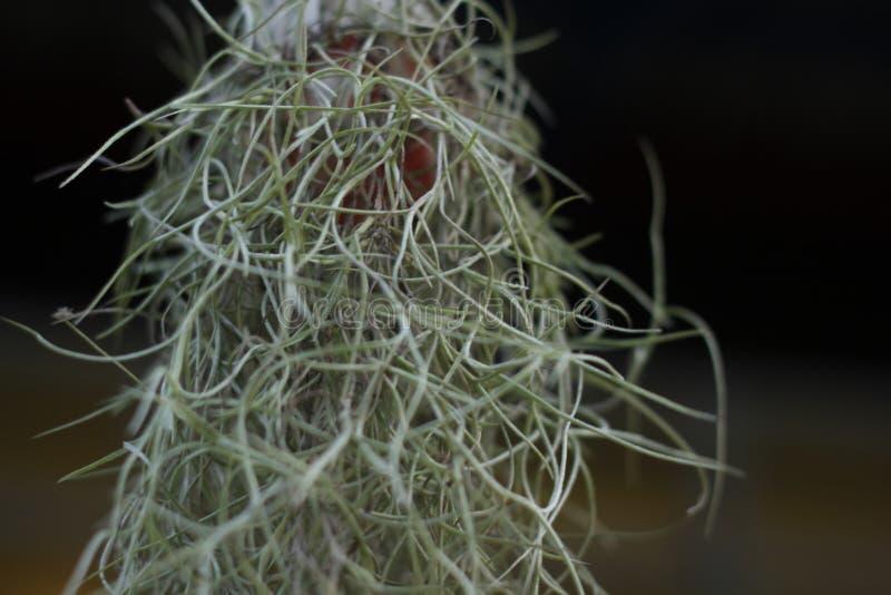 Samenvatting van huisinstallaties, het Spaanse mos hangen in tuin royalty-vrije stock afbeelding