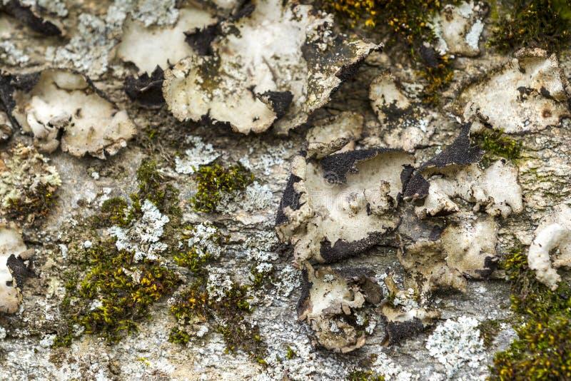Samenvatting van korstmos en mos royalty-vrije stock afbeeldingen