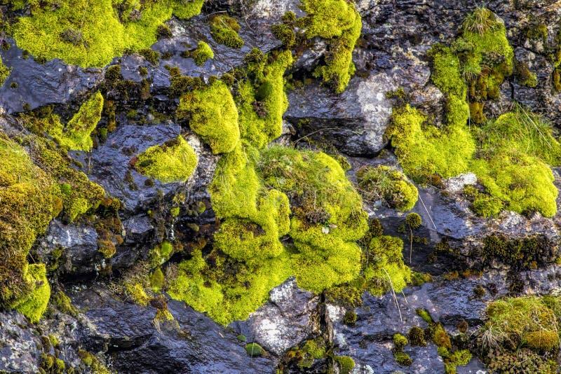 Samenvatting van mos op een rotsmuur stock afbeelding