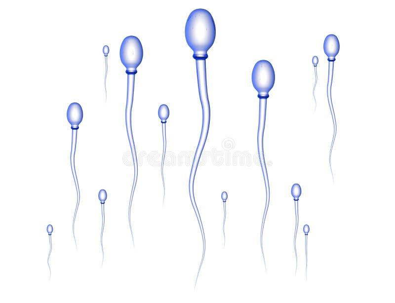 Samenzellen-Rennen lizenzfreie abbildung