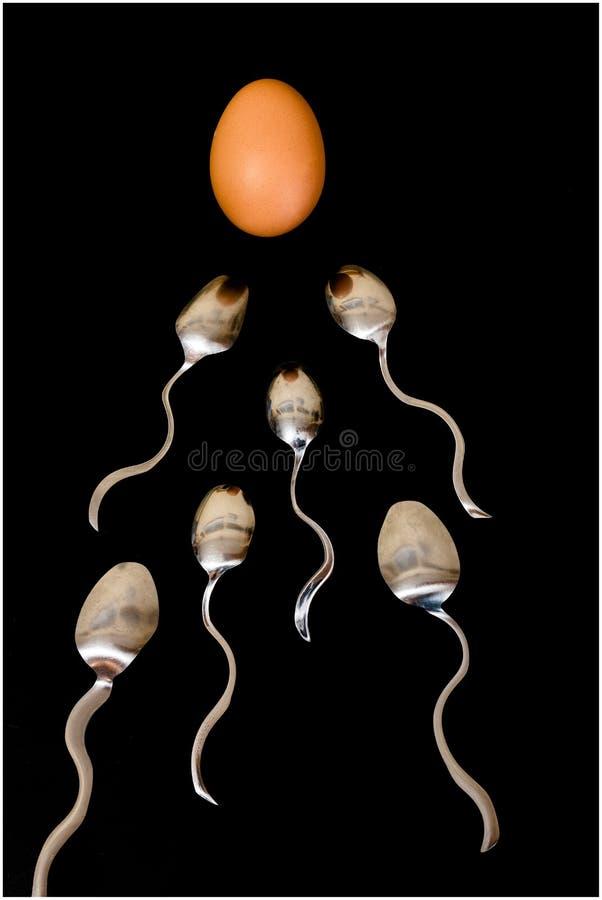 Samenzellen- und Eikonzept stockfotos