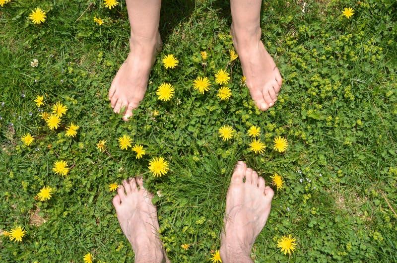 Samiec, żeńscy nadzy cieki w trawie, wśród dandelions zdjęcia stock