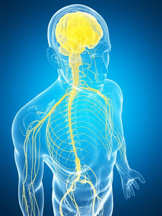 Download Samiec Podkreślał Nerwu System Ilustracji - Ilustracja złożonej z nauka, mózg: 28962027