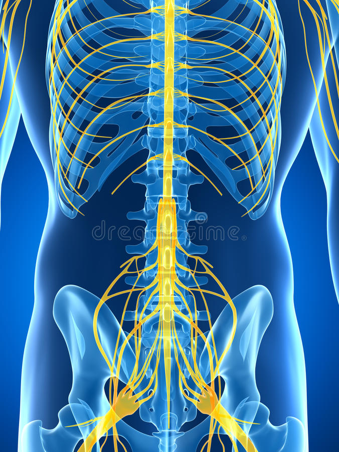 Download Samiec Podkreślał Nerwu System Ilustracji - Ilustracja złożonej z rendering, ciało: 28962053