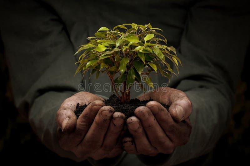 Samiec wręcza trzymać małego drzewa fotografia stock