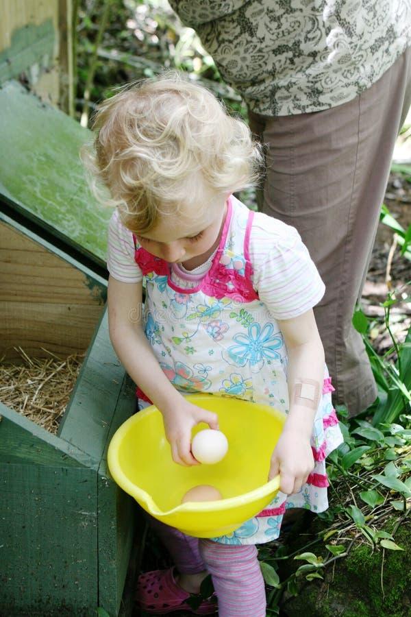 samla äggflickan fotografering för bildbyråer