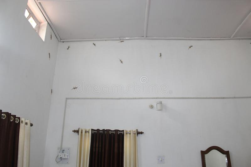 Samla av geckon i ett hus royaltyfri foto