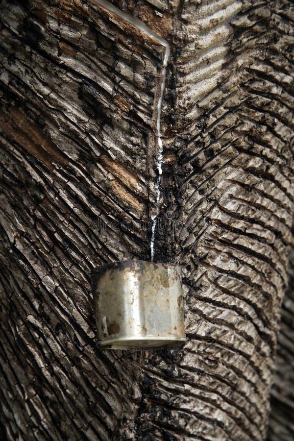 Samla gummi från träd arkivfoton