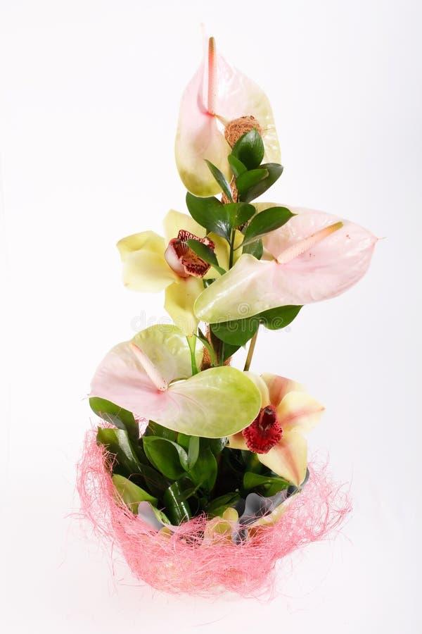 samla ihop blommor royaltyfri fotografi