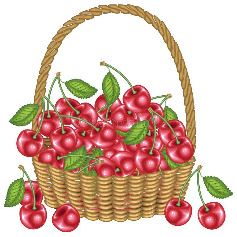 Samlade en gener?s korg f?r sk?rd A mycket av mogna saftiga b?r Ny härlig röd körsbär, en källa av vitaminer och nöje vektor illustrationer