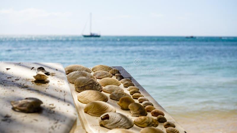 Samlade skal på en strand på den Utila ön i Honduras arkivfoton