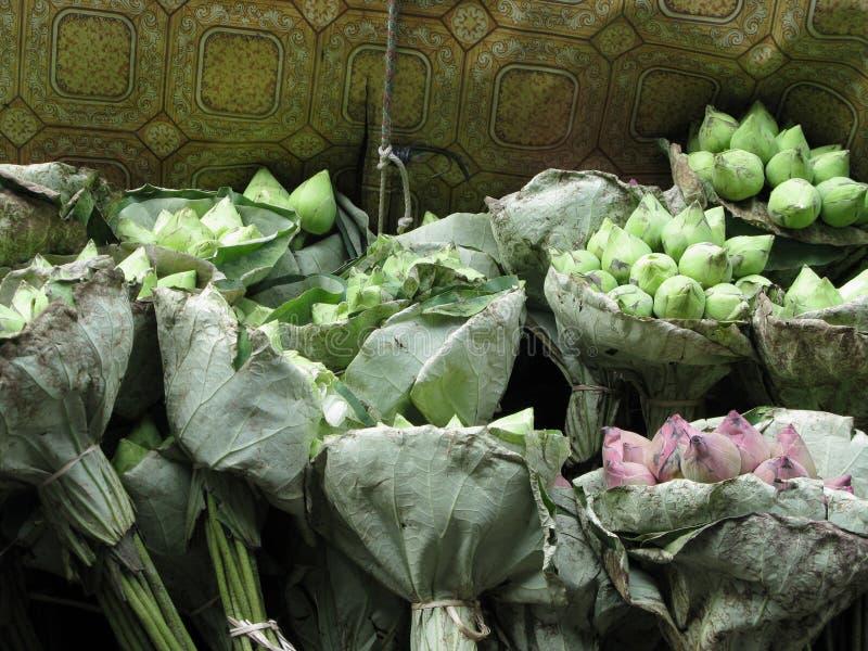 samlar ihop lotusblomma arkivfoton