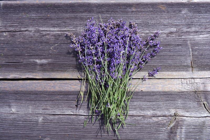 Samlar ihop medicinska blommor för ny lavendel på gammal träbakgrund royaltyfria bilder