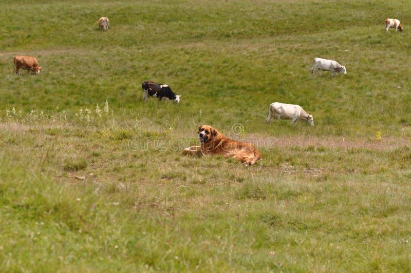 Samlas för hund royaltyfri bild