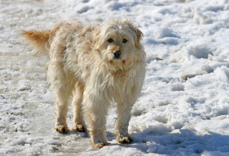 samlas för hund royaltyfria bilder