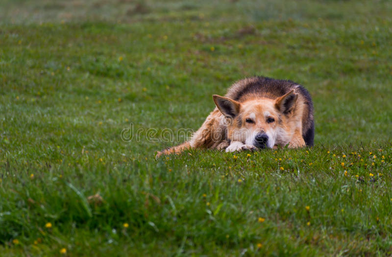 samlas för hund fotografering för bildbyråer