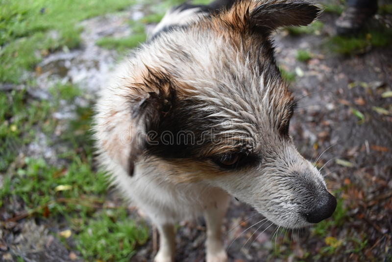 samlas för hund royaltyfria foton