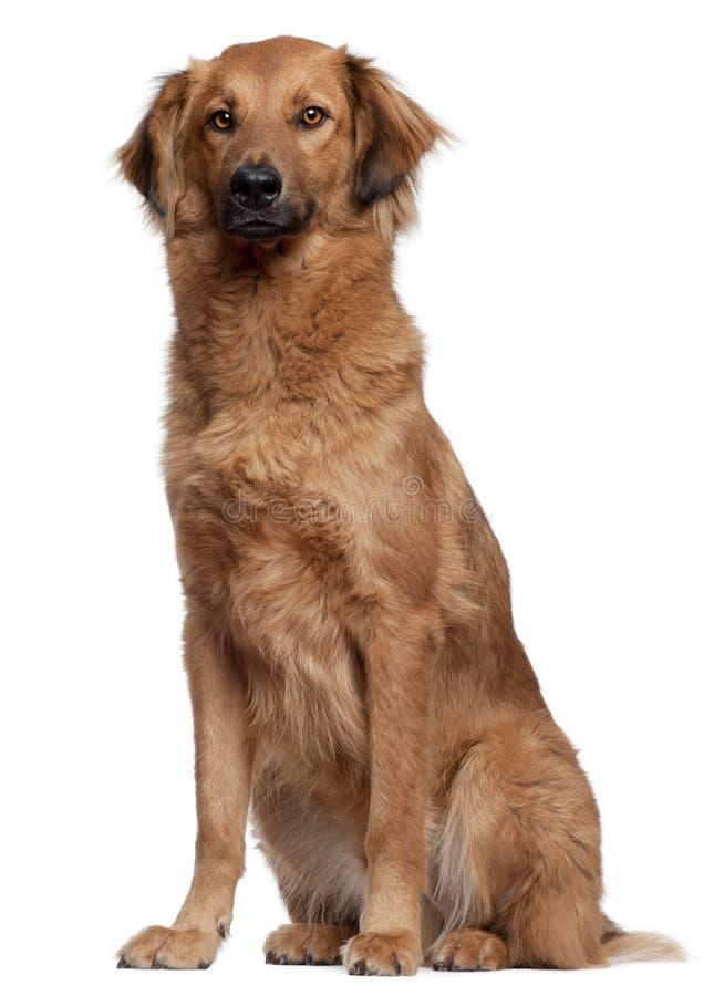 samlas sitta för hund royaltyfria bilder