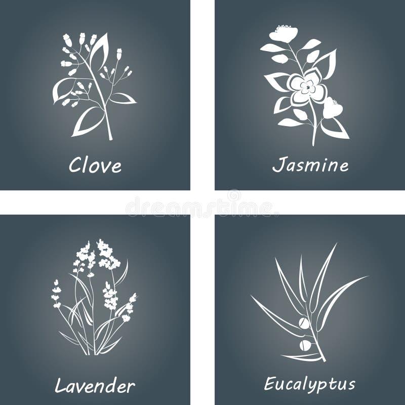 Samling av örtar Etiketter för nödvändiga oljor och naturliga tillägg Lavendel eukalyptuns, jasmin, klöv stock illustrationer