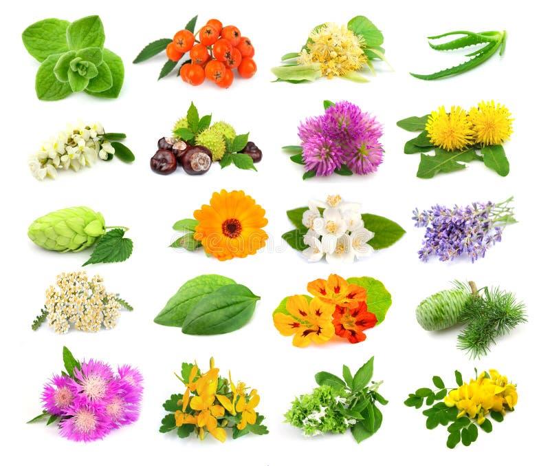 Samling av örtar och blommor royaltyfri foto