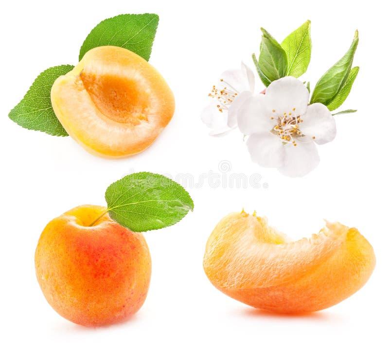 Samling av aprikors royaltyfria foton