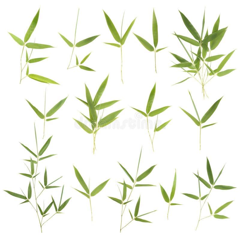 Samling av bambusidor arkivfoto