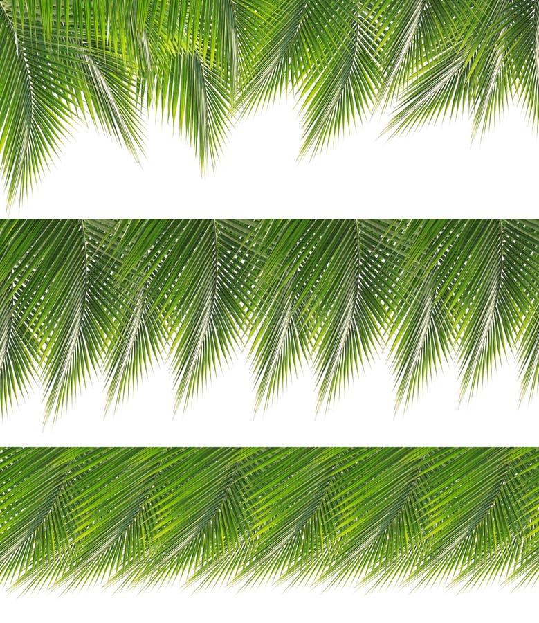 Samling av den gröna kokosnötsidagränsen arkivbilder
