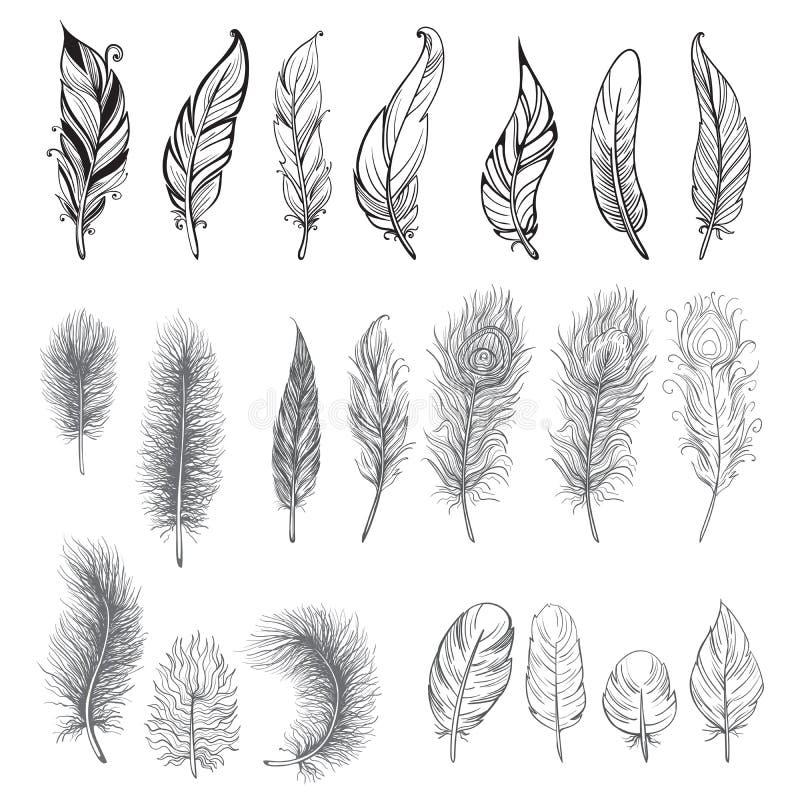 Samling av den hand drog fjädern vektor illustrationer