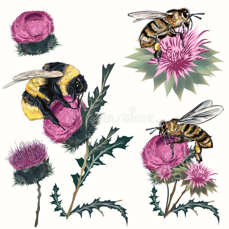 Samling av det höga detaljerade den vektorbiet, humlan och tisteln som isoleras på vit Botanisk stil för realistisk tappning, kry stock illustrationer