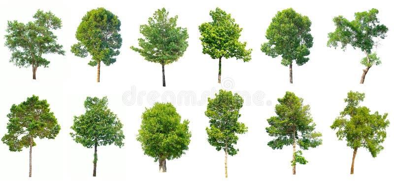 Samling av det isolerade trädet på vit bakgrund arkivbilder