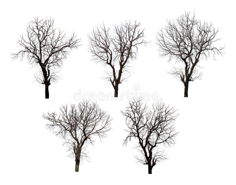 Samling av det svarta trädet för döda som isoleras på vit bakgrund fotografering för bildbyråer