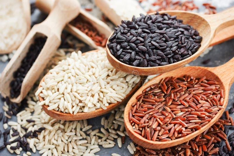 Samling av exklusiva gourmet- ris i träskedar - brun ri fotografering för bildbyråer