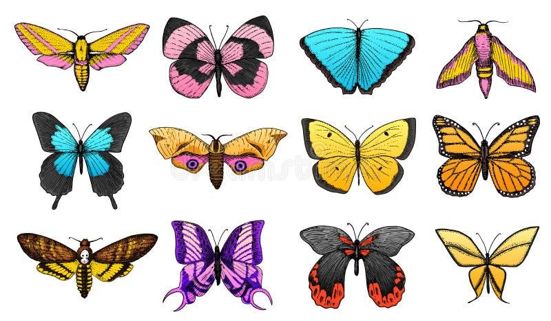 Samling av färgrik fjäril eller lösa malkryp Mystiskt eller entomologiskt symbol av frihet Dragen inristad hand vektor illustrationer