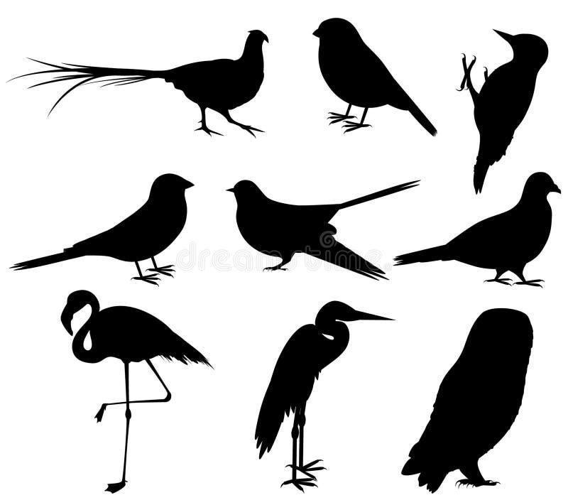 Samling av fågelkonturer stock illustrationer