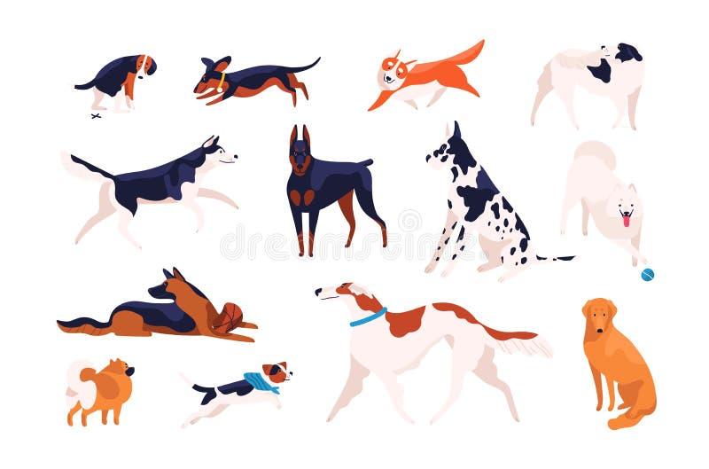Samling av förtjusande hundkapplöpning av olika avel som spelar, köra som går, sammanträde som pooping Packe av att roa tecknade  stock illustrationer