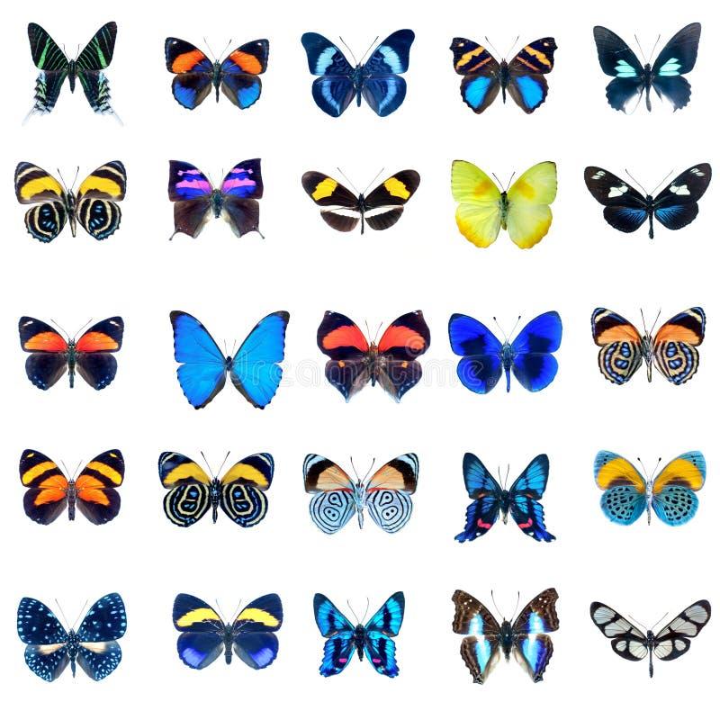 Samling av fjärilar på en vitbakgrund royaltyfri foto