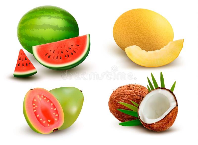 Samling av frukt och bär Vattenmelon honungsdagg, guava royaltyfri illustrationer