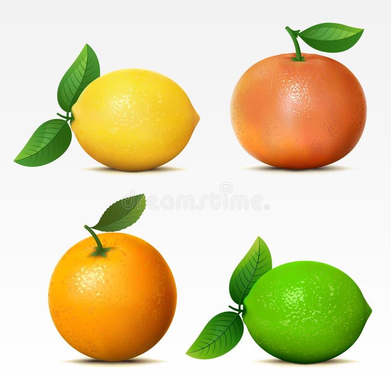 Samling av frukter stock illustrationer
