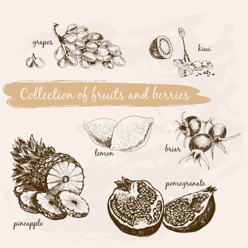 Samling av frukter och bär vektor illustrationer
