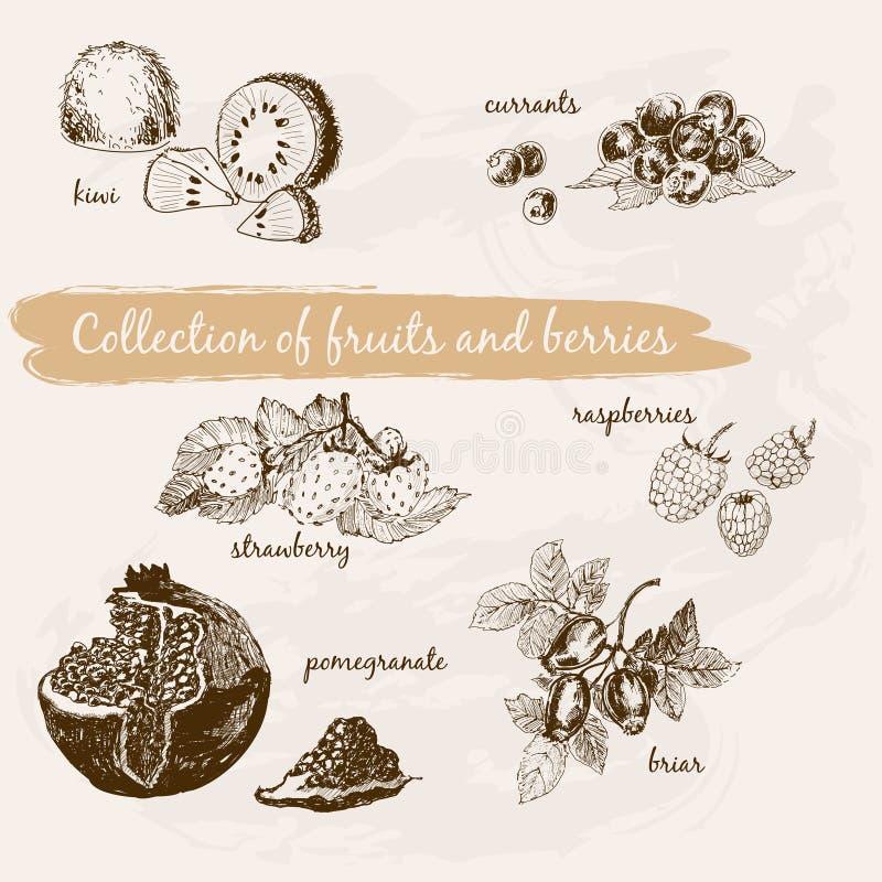 Samling av frukter och bär royaltyfri illustrationer