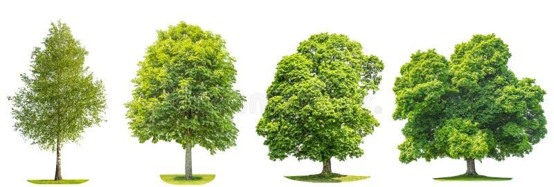 Samling av gröna träd lönn, björk, kastanj Naturobjekt arkivbilder