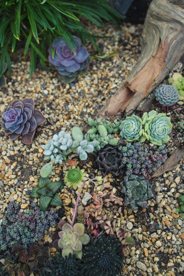 Samling av gulliga olika suckulenter arkivfoton
